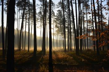 I miejsce Mgła w lesie, fot. Emilia Dul